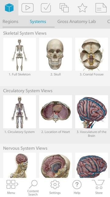 Как бесплатно установить Anatomy Atlas 2019 - блог об информационных